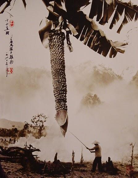 don-hong-oai18