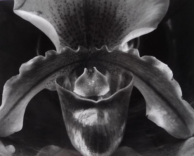Edward Weston nudes desnudo Cultura Inquieta-14